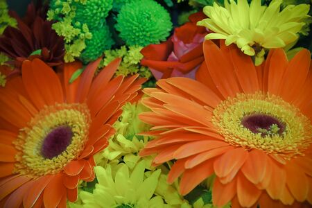 Beautiful festive bouquet in blur with two large gerbera flowers