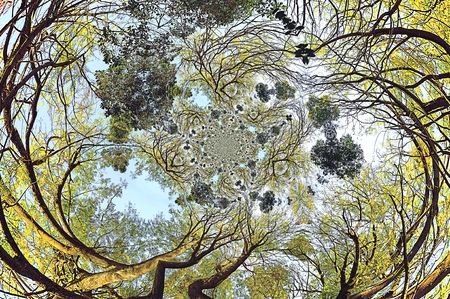 Crones of trees with imposition of various conversion effects, spherical bias and twisting