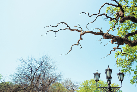 A piece of the park. Trees, branches, lantern. Stock Photo