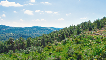 Jerusalem forest and hills