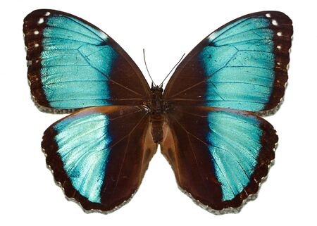 Butterfly with blue wings Stock Photo