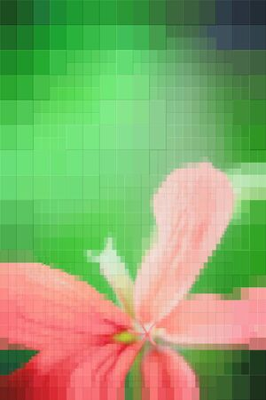 Composition flower on a green background. Blur. The effect of rectangles. 版權商用圖片