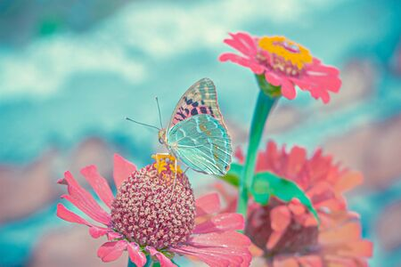 Beautiful vivid photo of a butterfly on a flower