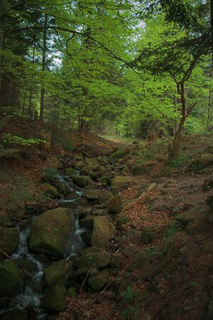 In the Carpathian forests strewn with a variety of vegetation