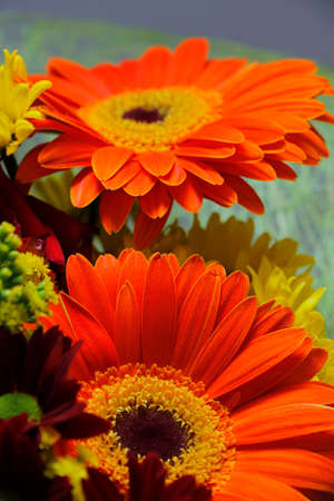 Festive bouquet with two gerbera flowers inside