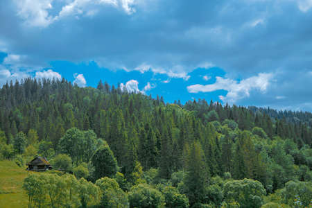 Forest slopes of the Carpathians with an abandoned house 版權商用圖片