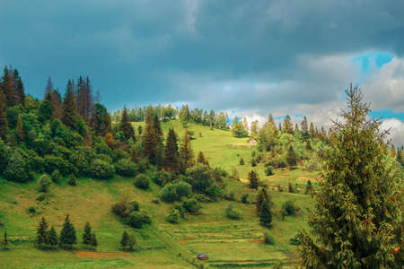 Forest slopes of the Carpathian region with a couple of houses in the frame 版權商用圖片