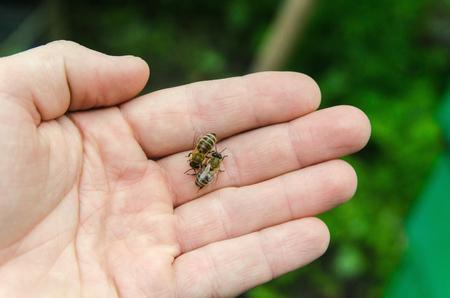 De honingbijen op de arm, groene achtergrond Stockfoto