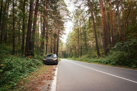 drive through: forest road and car on the roadside