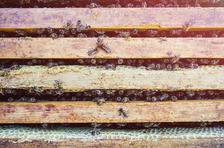 A lot of bees on the frame