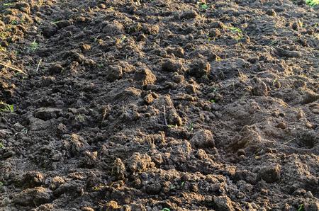 The black fertile ground texture