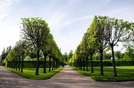 Beautiful smooth alleys with trees