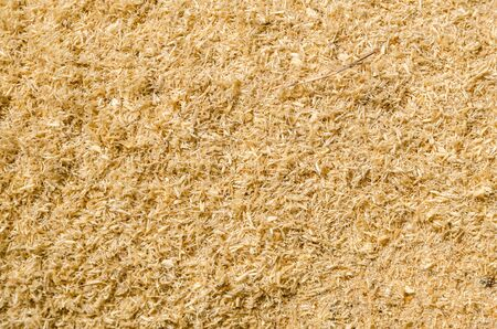 Texture of sawdust from a woodworking machine Banque d'images