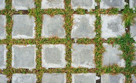 texture of concrete tiles with sprouted grass
