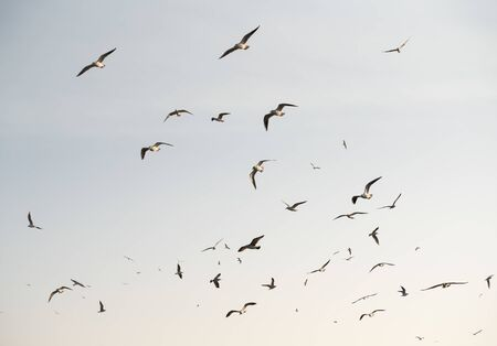 Flock of seagulls on sky background