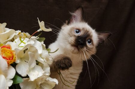 Cute Kitty with flowers Stock Photo