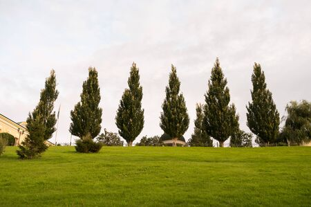 Row of trees on grass field