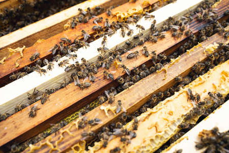 Bees on the hive frame. Selective focus