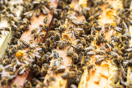 Bees in a hive on a frame. Selective focus