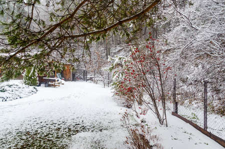 The snowy covered winter yard Standard-Bild