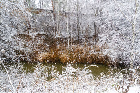 The snow-covered stream bank. Snowfall
