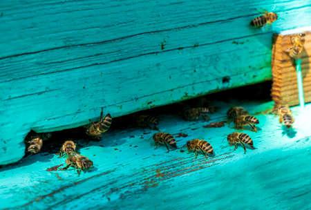 The bees near the blue hive Standard-Bild