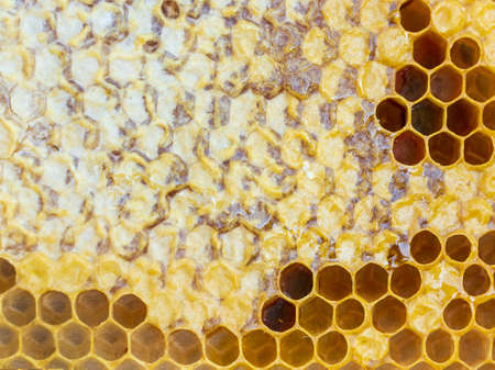 The texture honeycomb with honey