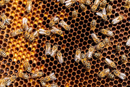 Frame with bees near the beehive, and chisel Standard-Bild