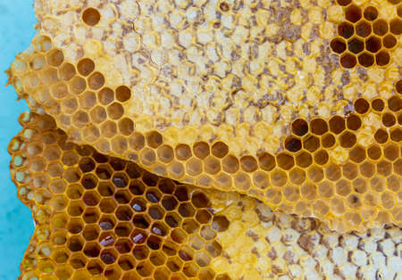 The honeycomb with honey