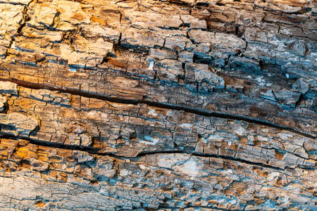 The old tree trunk wood texture