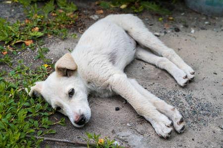 Sad puppy lying on the ground Standard-Bild