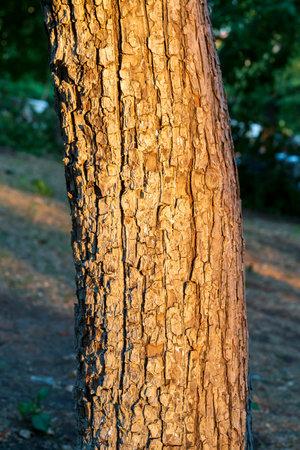 Texture fragment of a sunset tree Standard-Bild