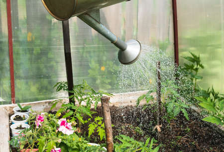 Watering beds with plants with watering can