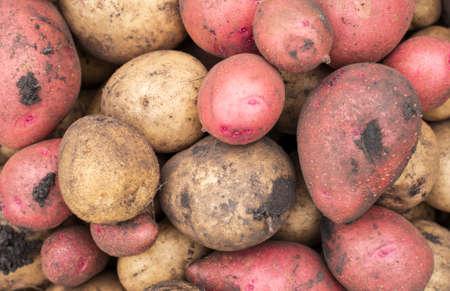 Texture of potatoes. Fresh harvest. Selective focus