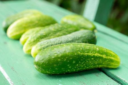 Lots of juicy cucumbers on rustic bench. Fresh harvest. Selective focus Standard-Bild
