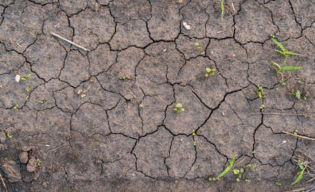 Texture of dry crashed earth with germinating plants