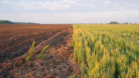 Two fields plowed and sown Standard-Bild