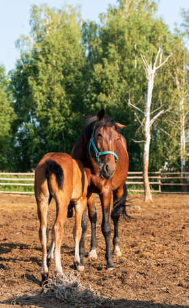 The horse and foal on a walk Standard-Bild