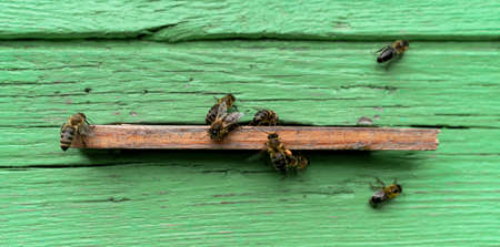 A lot of bees around the hive. Selective focus