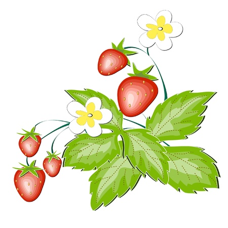 delightfully: Red wild strawberry a berry and a white flower Illustration
