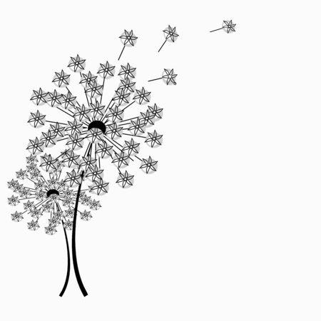 softly: Dandelions