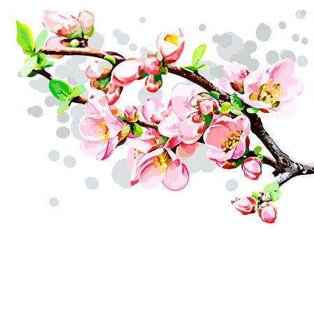 spring, blossoming branch of cherry Stock Vector - 17076014