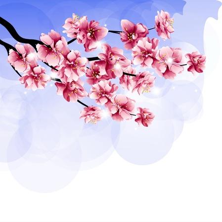 꽃이 만발한: spring, blossoming branch of cherry