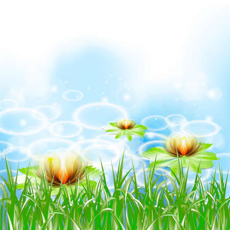 Easy beautiful Background with colors the Lily  Vector