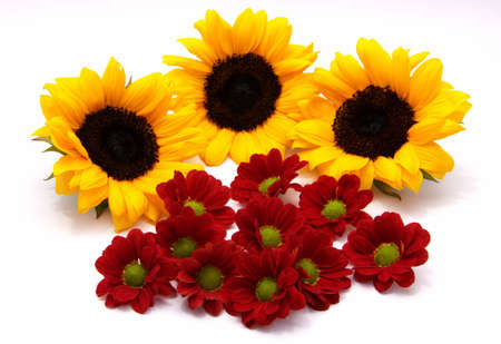 colored backgound: Sunflowers and gerberas Stock Photo