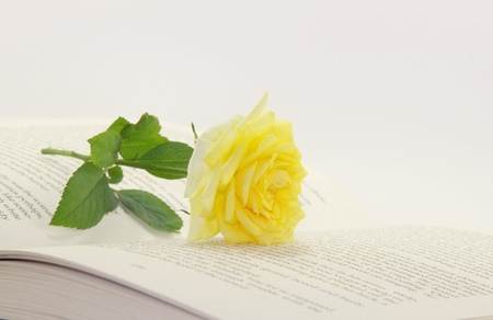 Open book and rose flower Stock Photo