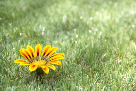 Grass background with a flower Stock Photo - 16302730