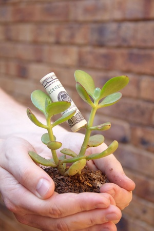 Young money tree in hands with dollar leaf Stock Photo