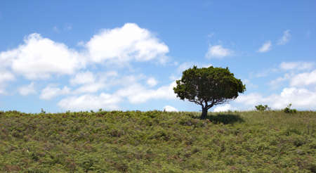Tree on the hill on blu sky with white clouds