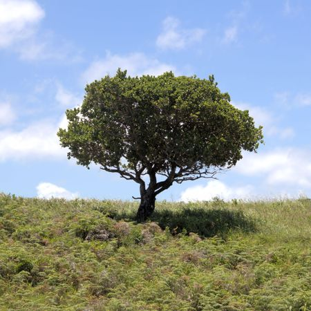 Tree with green leaves on the hill with blue sky background